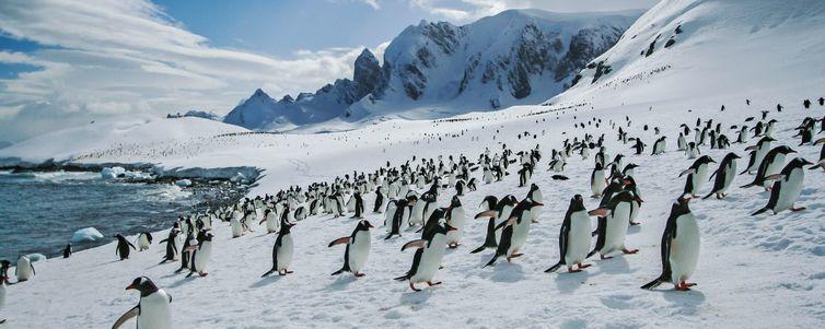 Classic Antarctica Eclipse Tour